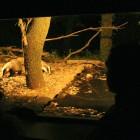 Naturaprop - Descobreix la fauna salvatge - 6444f-aguait-nit.jpg